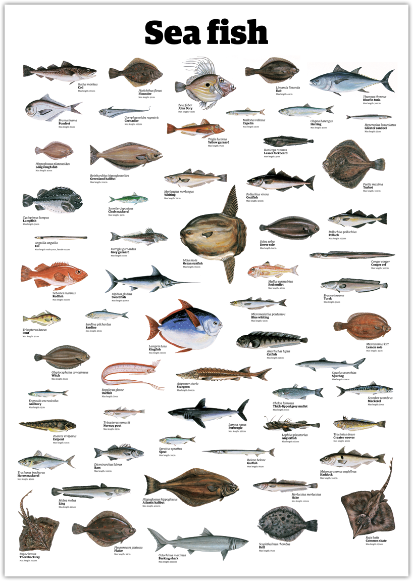 sea fish pictures and names